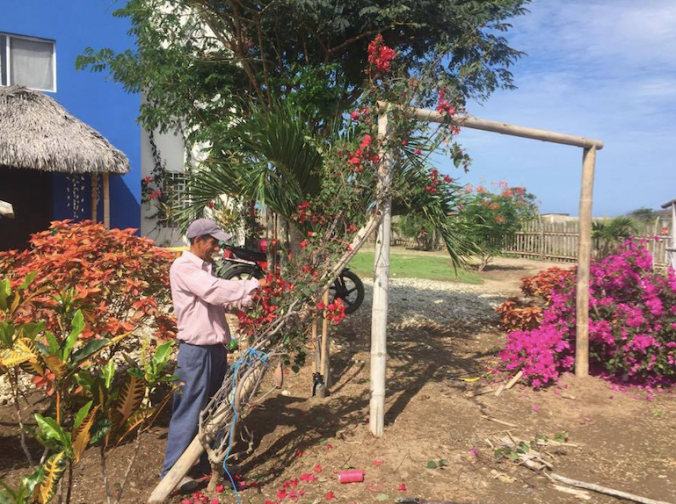 Paulo doing a heck of a job creating a simple bamboo trellis for two bougainvilleas.